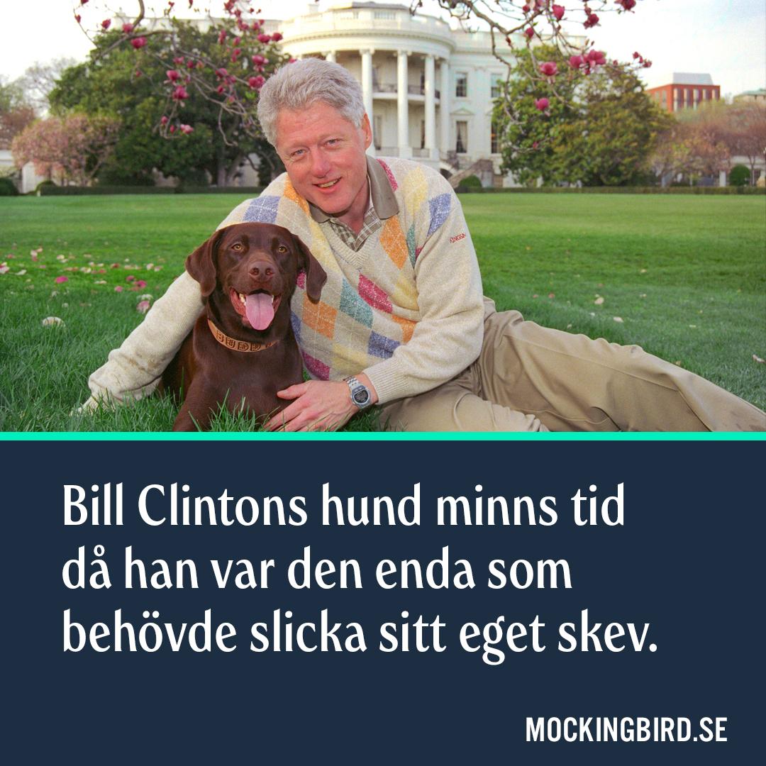 Bill Clintons hund minns tid då han var den enda som behövde slicka sitt eget skev.